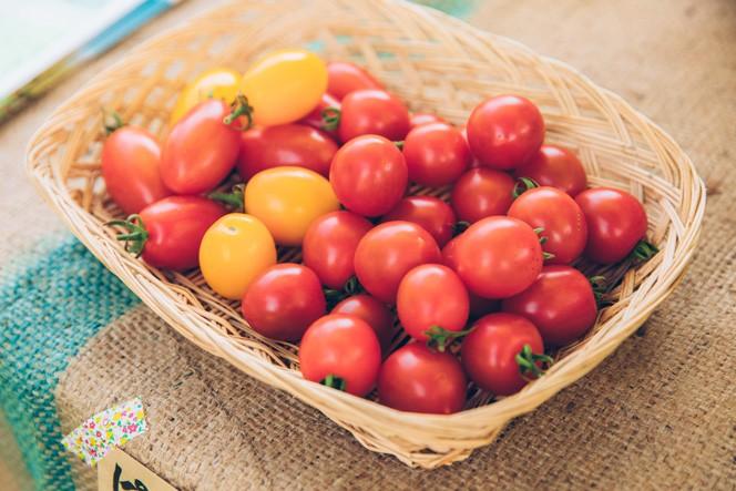 もぎたてのミニトマト