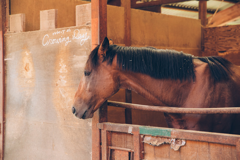 競馬場から避暑に来た馬。競馬馬は気性が荒めなのだそうです。