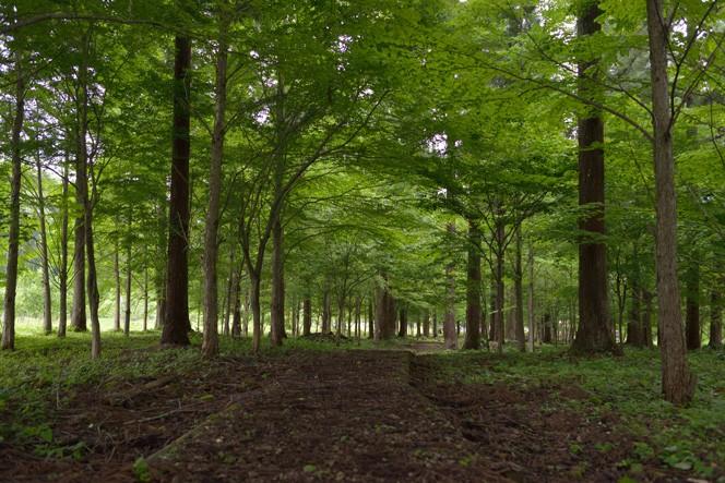 飛騨の森(提供写真)