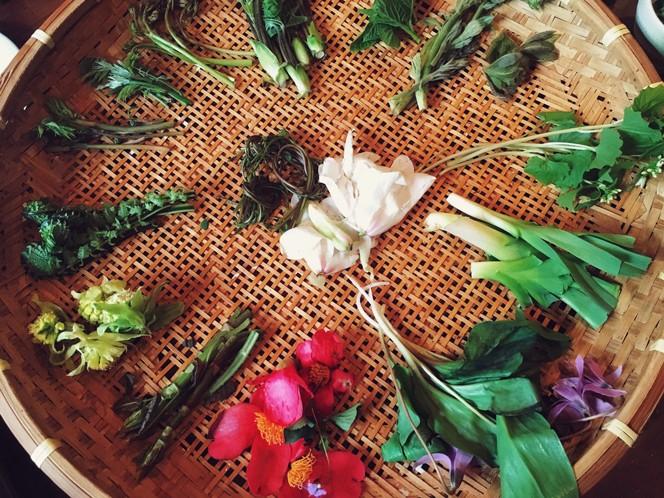 森の中を散策しながら山菜を収穫、そのあとはシェフによる山菜づくしディナー(画像提供/LAMP)