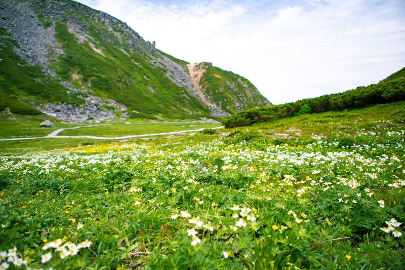 とても日本とは思えないお花畑。夢のようです。