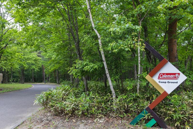 キャンプサイトは緑鮮やかな森の中