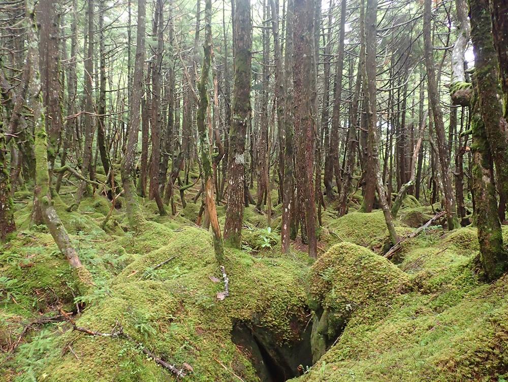 白駒池のなかでも最も苔が美しいという、雨の日の「もののけの森」(山浦さん提供写真)