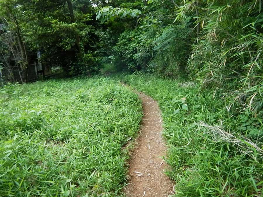 公園内に広がるトレイルは走りやすいだけでなく適度なアップダウンもあり公園とは思えないほどのトレイルが広がっています