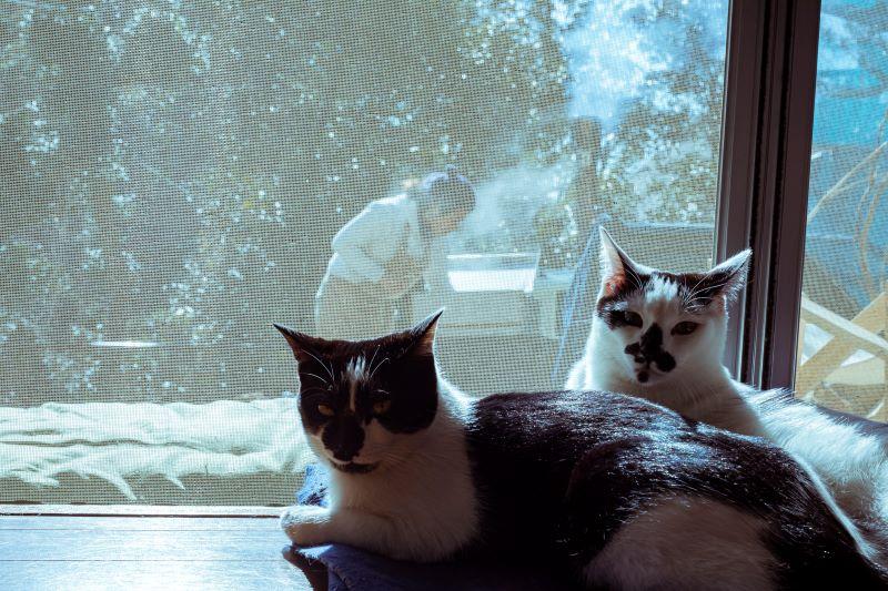 いっしょに暮らしている2匹の愛猫は、佐島に引っ越してきて出会った元・保護猫ちゃん