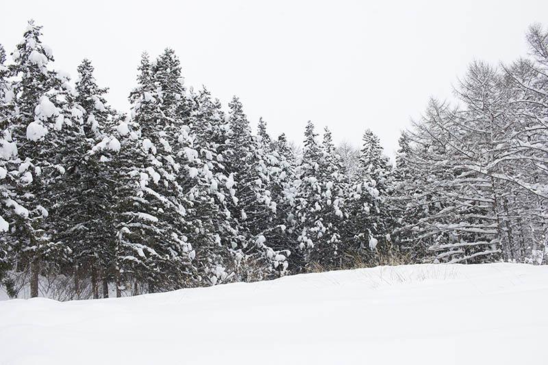 静かな森の中をゆっくり散歩するのは雪山の楽しみのひとつ。普段は人が歩かないところなら動物の足跡もいっぱい見つけられます。
