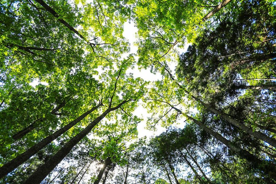 新緑が美しいのがサンタヒルズの特徴の1つ
