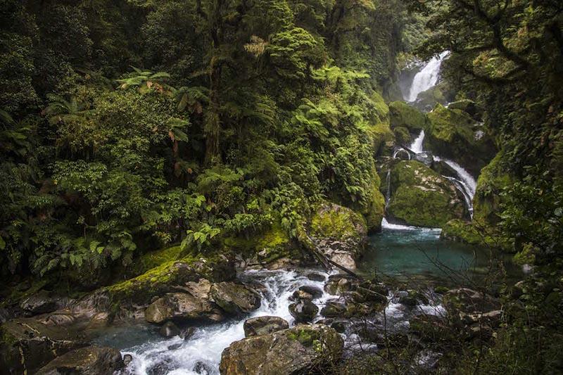 どことなく屋久島に雰囲気が似ている苔むす森もあります