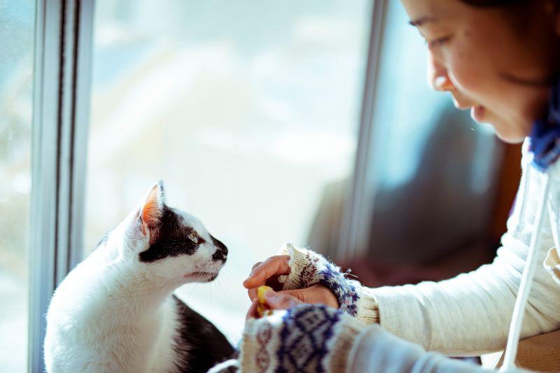 愛猫の〈こむぎ〉と〈かもめ〉も、焼き芋が大好物。毎日こんなオイシイものが食べられるなんてうらやましいっ