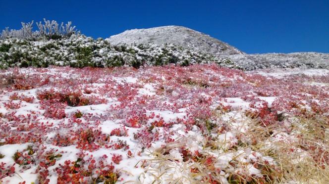 快晴のもと撮影した、白山を包む雪と紅葉(写真提供:坂次さん)