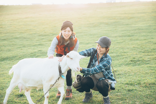 ヤギ、羊、牛、うさぎと遊べます。