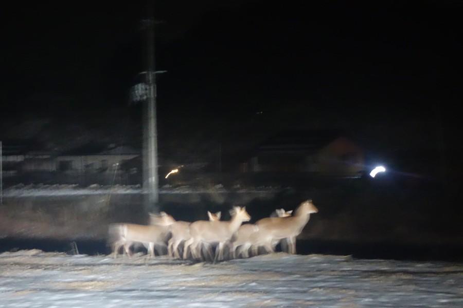 毎晩、鹿王国。自宅より徒歩20秒
