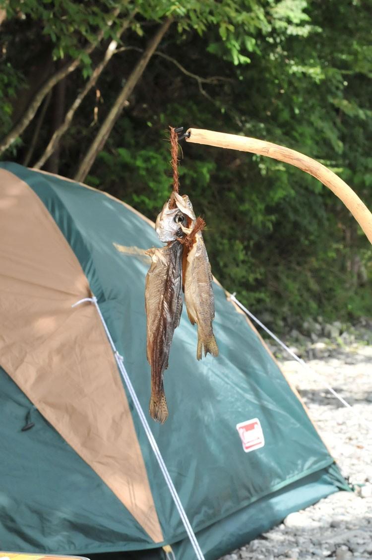 キャンプ場近くの川で獲ったマスを燻製に
