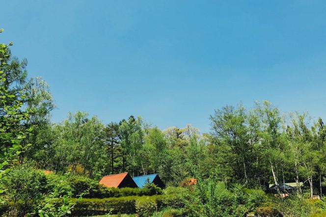 標高1000mの山間にあるせいなの森キャンプ場(提供写真)