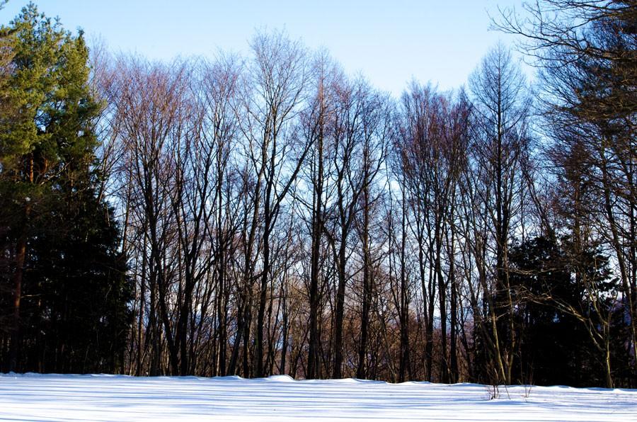シェアオフィスの敷地内にはバックに八ヶ岳をのぞむ豊かな森たちが生い茂る