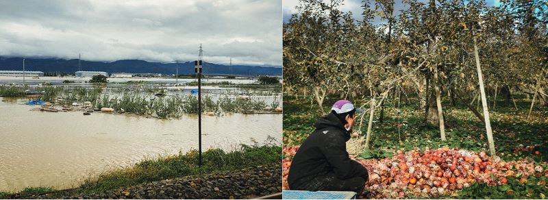 台風による水害で浸水したりんご畑(左)と落ちたりんごを片付けるする宮下さん(右)(提供写真)