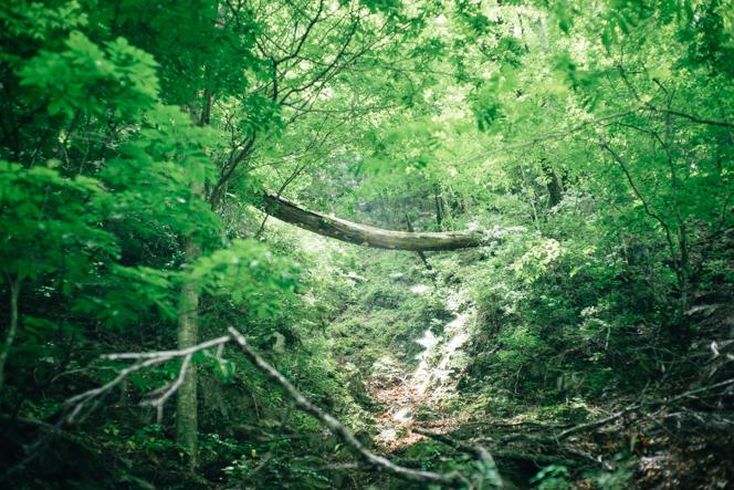 停留所から林道を約2時間、原生林の道を約30分歩くと山小屋に着く。