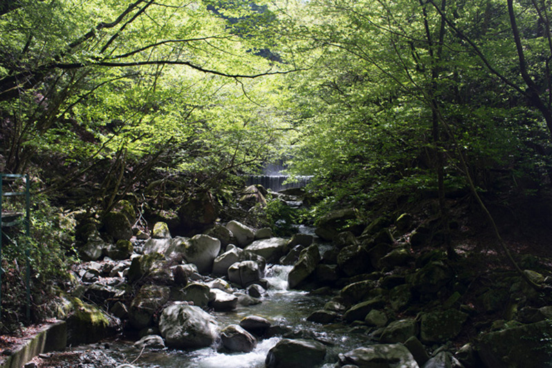 (西丹沢ビジターセンターから30分も歩けばこんな渓谷美に恵まれる。)
