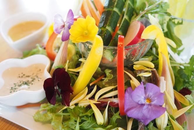 どの料理もたっぷりの野菜が使われ滋味豊か。そのカラフルさで食が進む