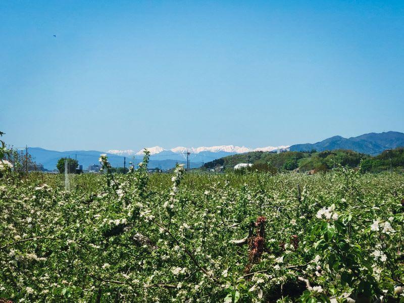 北アルプスの山々を望む宮下樹園(提供写真)