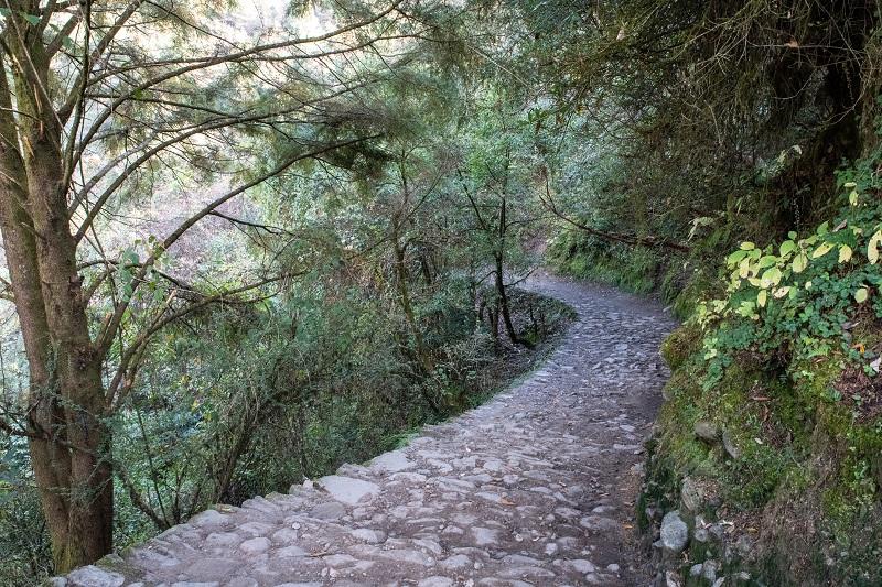 綺麗に整備された登山道。