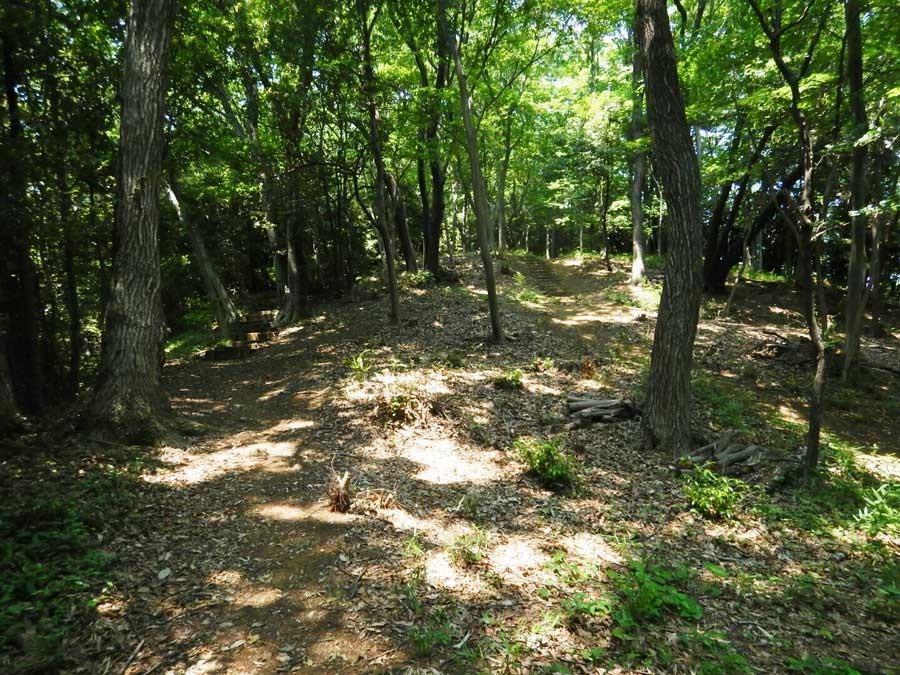 公園の中に入ると涼しいくらいの木陰トレイル