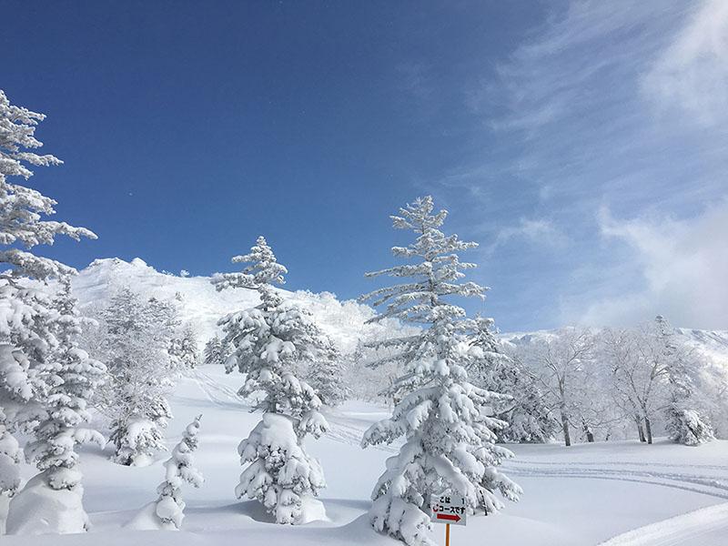 下部コースから山頂方面を望む。自然の雪山ならではの素晴らしい景色がひろがります。
