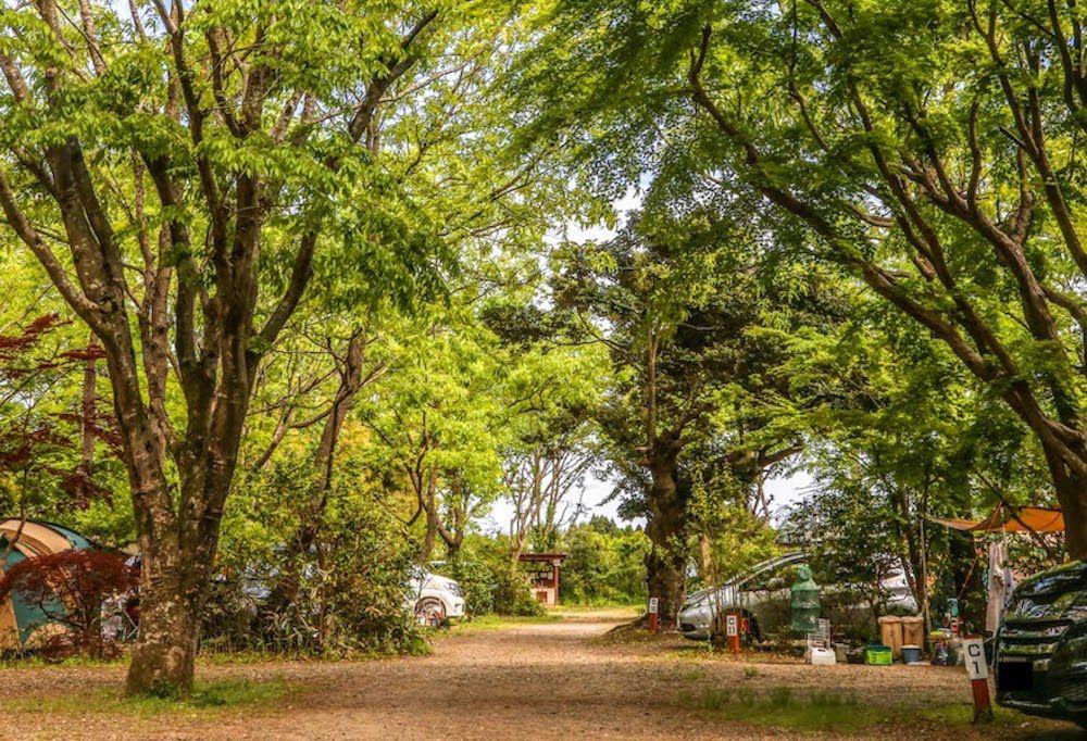 第4位 有野実苑オートキャンプ場