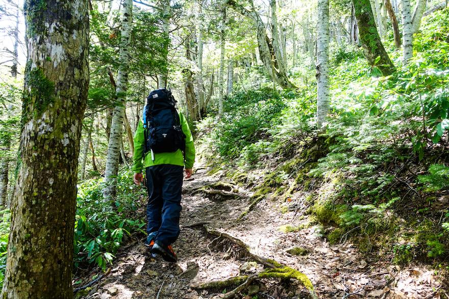 羅臼岳 登山口から約1時間ほどの緑豊かな登山道